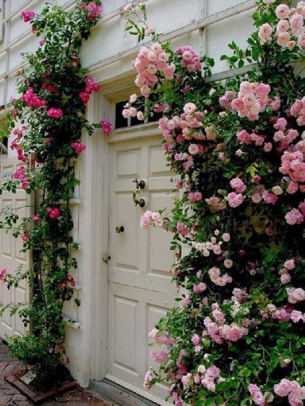 """Những cổng nhà có hoa hồng leo lãng mạn đẹp đến """"lịm tim"""" - Ảnh 9."""