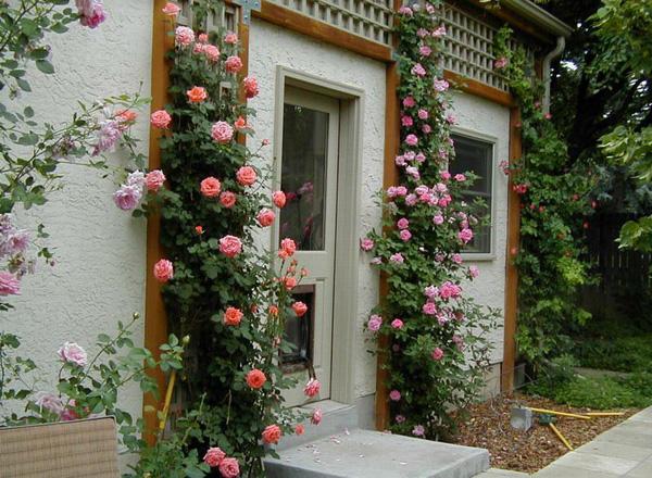 """Những cổng nhà có hoa hồng leo lãng mạn đẹp đến """"lịm tim"""" - Ảnh 10."""