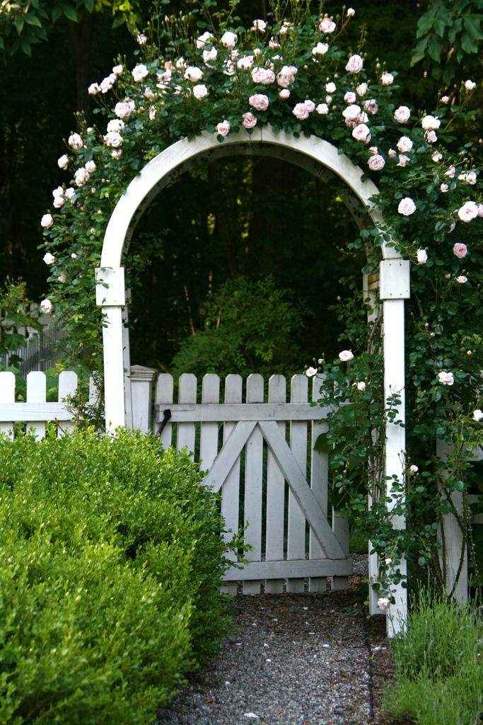 """Những cổng nhà có hoa hồng leo lãng mạn đẹp đến """"lịm tim"""" - Ảnh 8."""