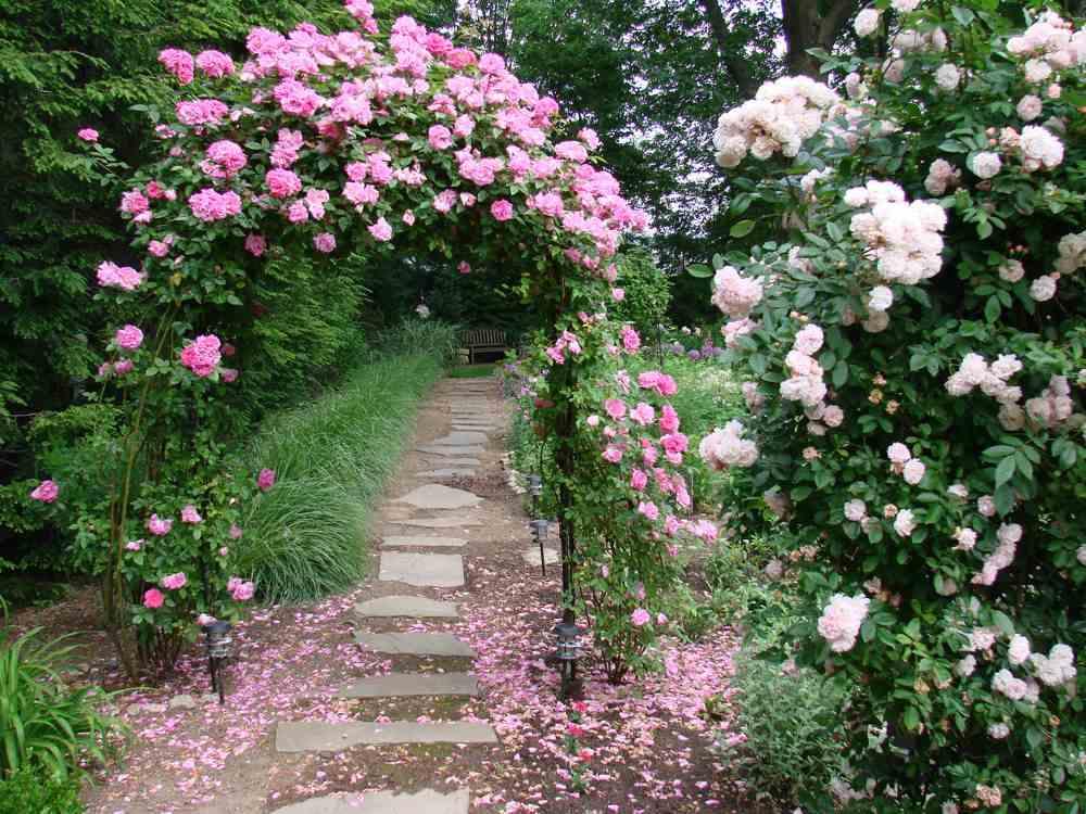"""Những cổng nhà có hoa hồng leo lãng mạn đẹp đến """"lịm tim"""" - Ảnh 5."""