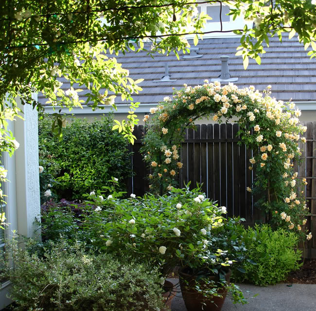 """Những cổng nhà có hoa hồng leo lãng mạn đẹp đến """"lịm tim"""" - Ảnh 2."""
