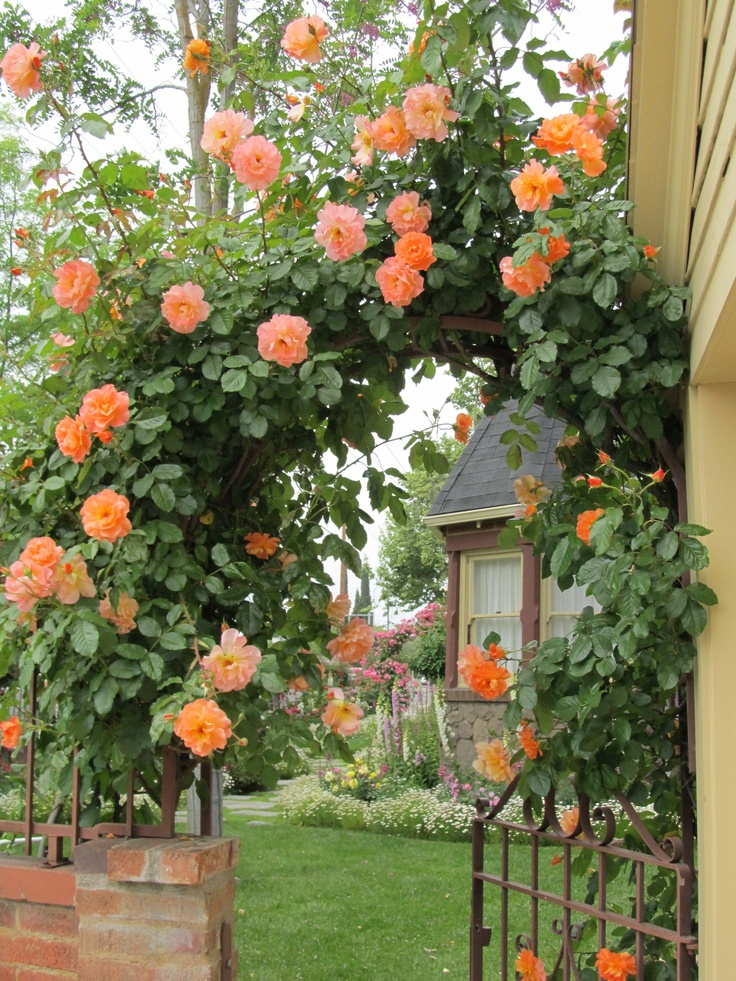"""Những cổng nhà có hoa hồng leo lãng mạn đẹp đến """"lịm tim"""" - Ảnh 7."""