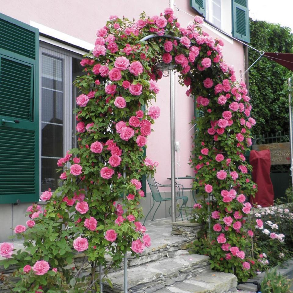 """Những cổng nhà có hoa hồng leo lãng mạn đẹp đến """"lịm tim"""" - Ảnh 6."""