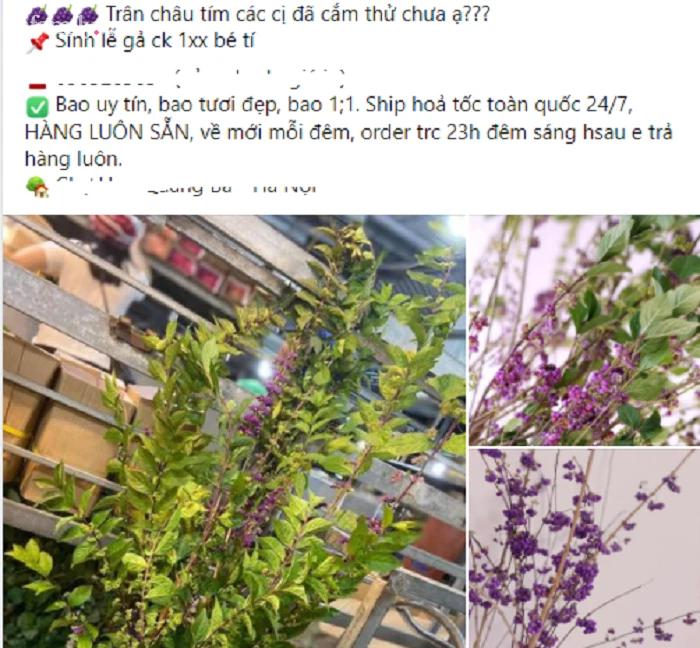 """120.000 đồng/set hoa Tử Châu, chị em nô nức rinh về cắm """"tím sắc nhà"""", đốn tim cư dân mạng khiến ai nấy đều nức nở khen - Ảnh 3."""