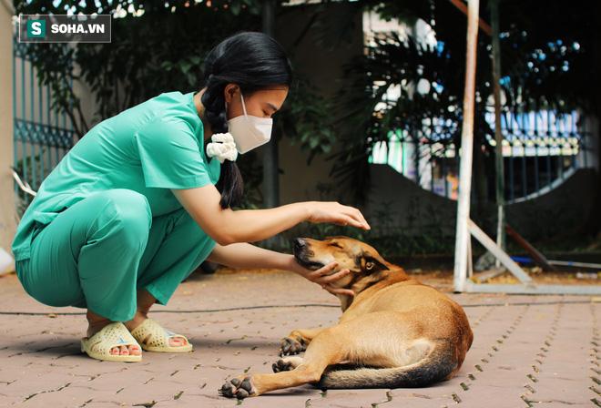Chủ mất vì Covid-19, chú chó được tình nguyện viên nuôi dưỡng rồi cũng qua đời: 'Nó không đợi được ngày để tang chủ' - Ảnh 2.