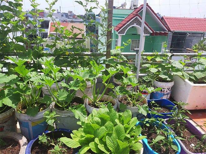 Mua hạt giống 10 nghìn đồng, bố Sài Gòn được vườn xanh mướt, mướp dài cả mét - Ảnh 7.