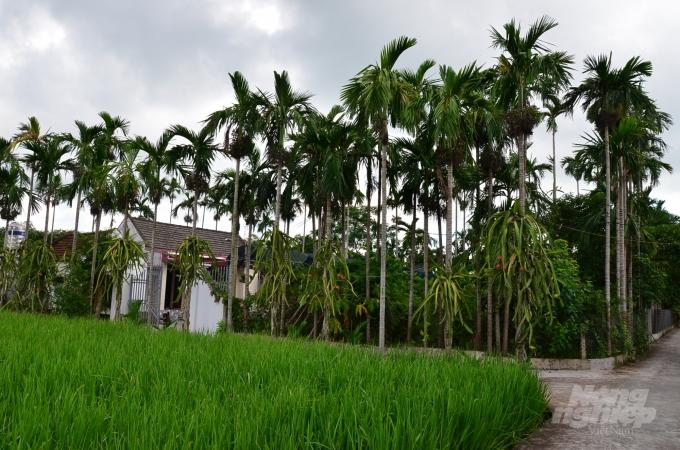 Loại cây ở Việt Nam ăn một nắm muối, trả một phân vàng - Ảnh 7.