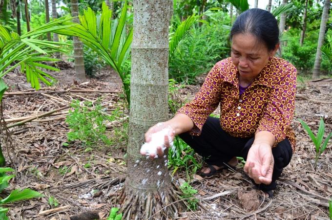 Loại cây ở Việt Nam ăn một nắm muối, trả một phân vàng - Ảnh 2.