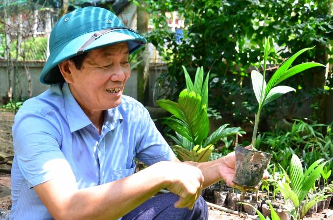Loại cây ở Việt Nam ăn một nắm muối, trả một phân vàng - Ảnh 5.