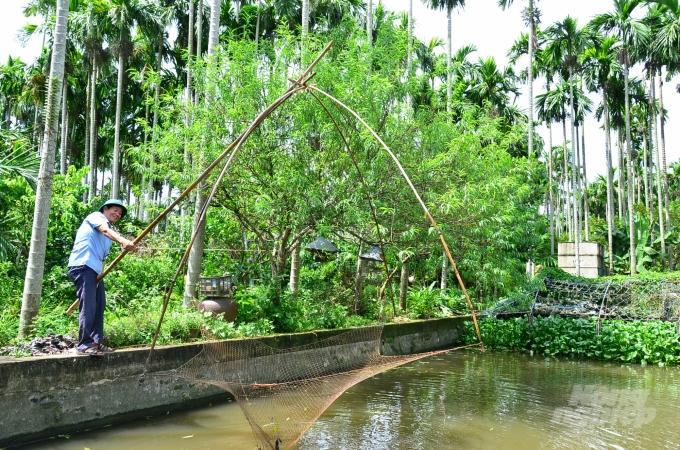 Loại cây ở Việt Nam ăn một nắm muối, trả một phân vàng - Ảnh 6.