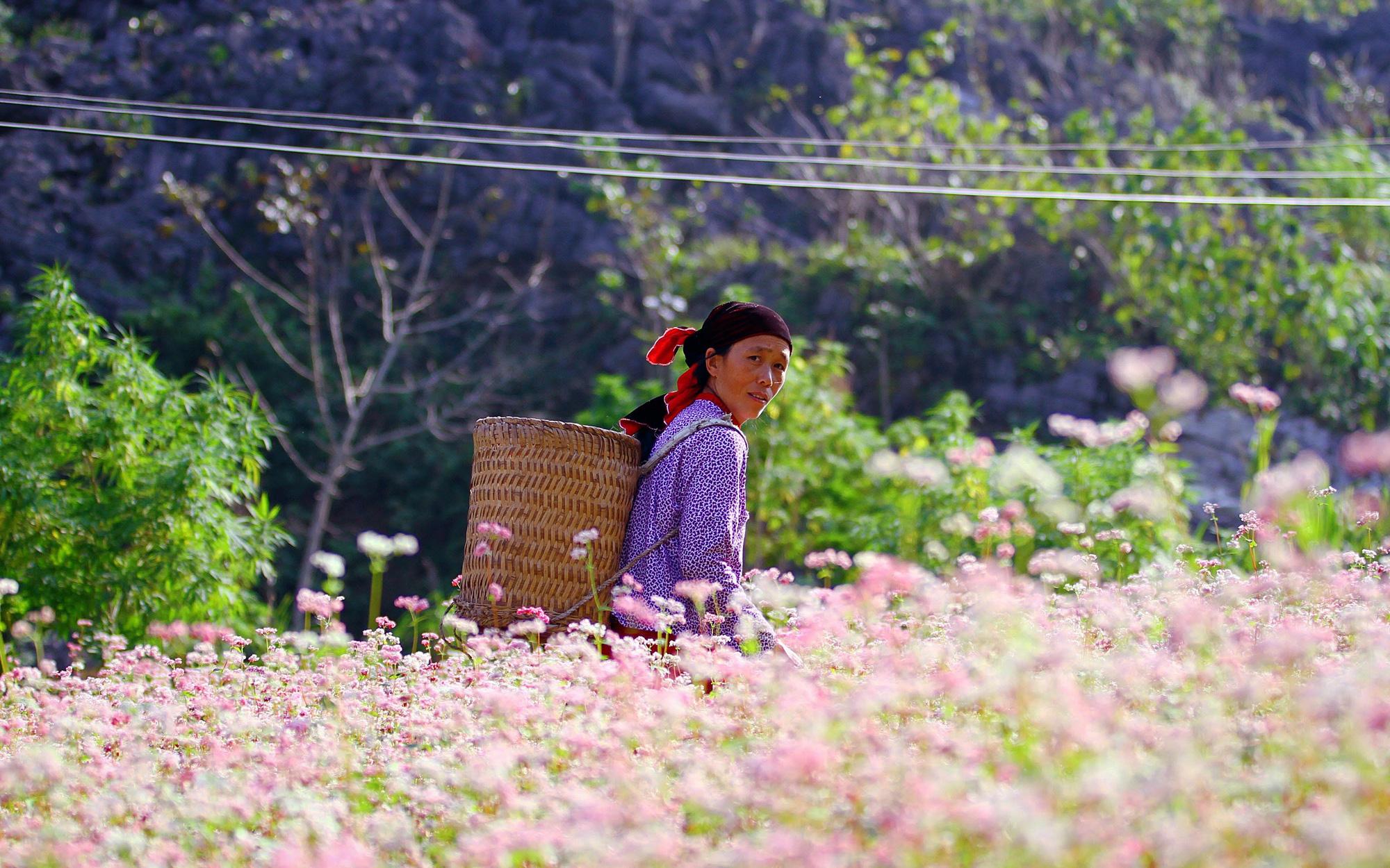 Hà Giang - Nơi đá nở hoa