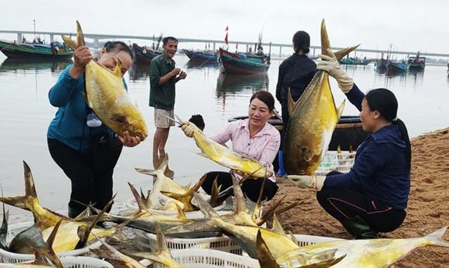 Kéo mẻ lưới bắt 300 con cá vàng rực, bán cả mớ thu 600 triệu đồng - Ảnh 1.