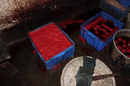 Kinh hoàng cảnh sản xuất tiết vịt bẩn cho nhà hàng - Ảnh 9.