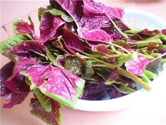 Loại rau được coi là món ăn trường thọ mọc đầy vào mùa hè, giá rẻ, đừng bỏ qua - Ảnh 4.