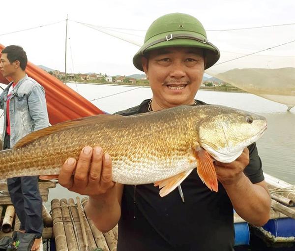 Sự thật về sủ vàng - loài cá quý hàng tỷ đồng ở Việt Nam - Ảnh 6.
