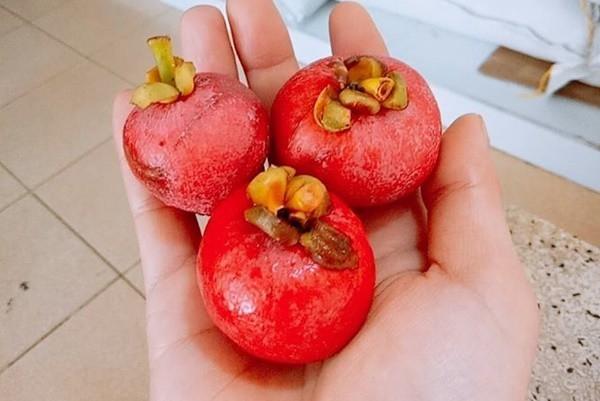 4 loại quả rừng giá chát vẫn được lùng mua - Ảnh 13.