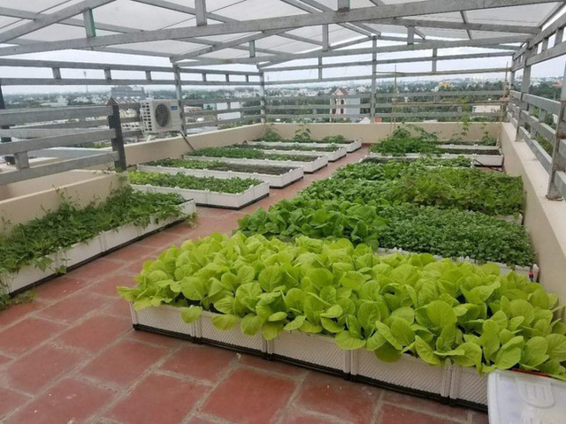 Cách thiết kế vườn rau sân thượng mùa dịch vừa đơn giản lại đẹp mắt - Ảnh 2.