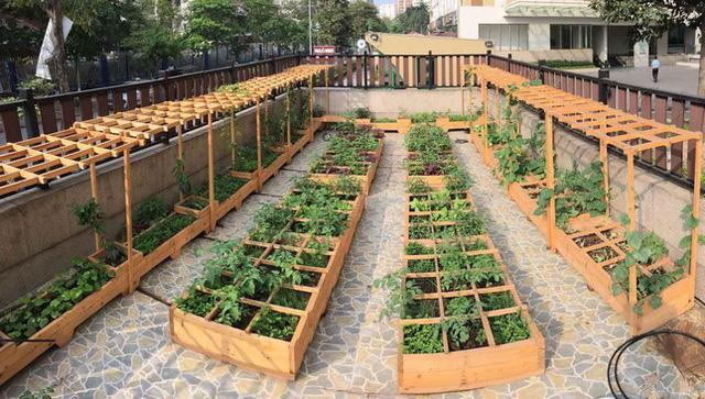 Cách thiết kế vườn rau sân thượng mùa dịch vừa đơn giản lại đẹp mắt - Ảnh 6.