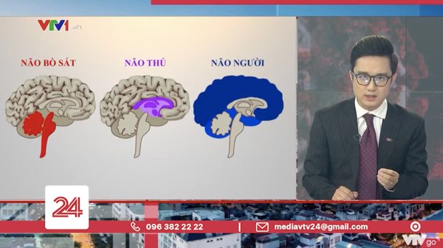 Tranh cãi BTV của VTV ví von não người- não thú để cà khịa những trường hợp vi phạm quy định giãn cách - Ảnh 4.