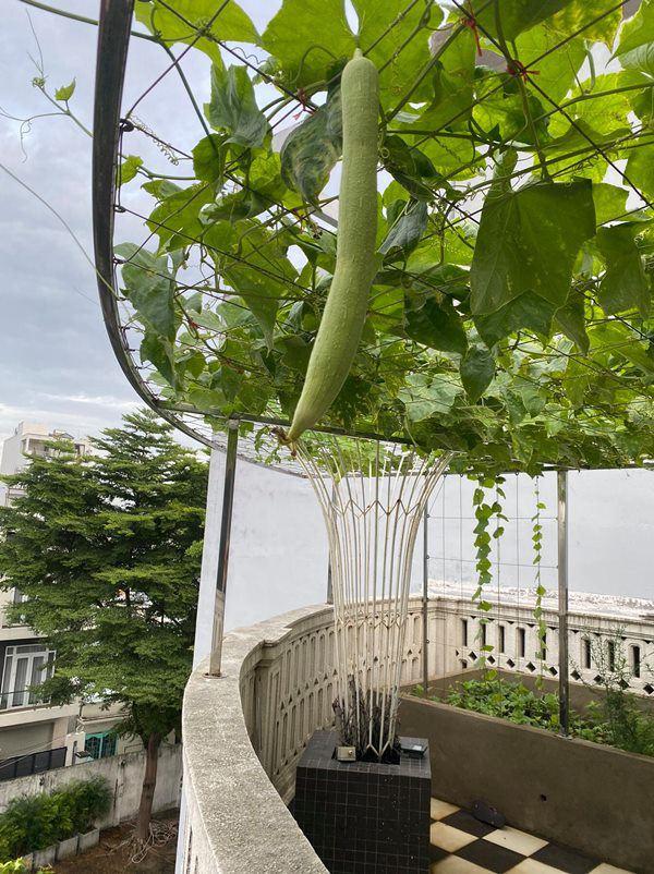 Hoa hậu Giáng My cùng mẹ trổ tài làm vườn trên sân thượng - Ảnh 4.