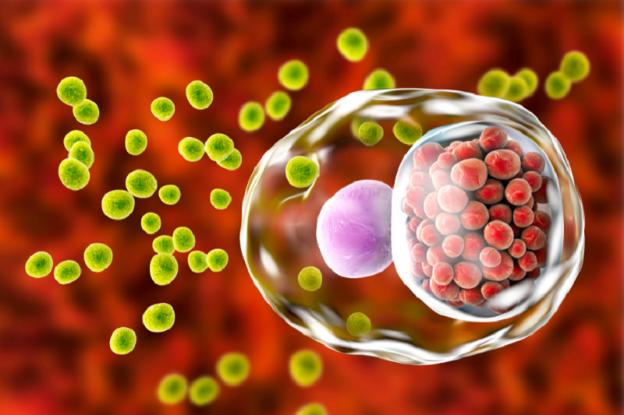 Điểm mặt một số bệnh lây truyền qua đường tình dục gây vô sinh  - Ảnh 2.
