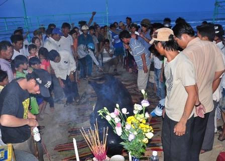 Cá voi nặng gần 1 tấn bên bờ biển Quảng Nam 4