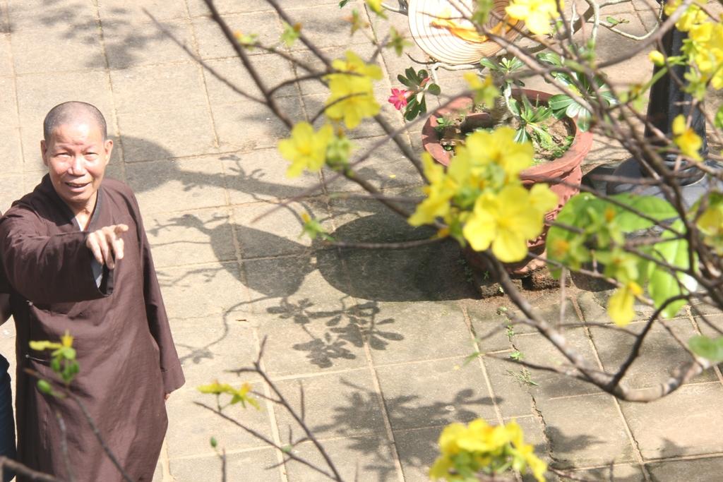Cận cảnh hoa mai nở rợp trời trên núi Ngũ Hành Sơn 5