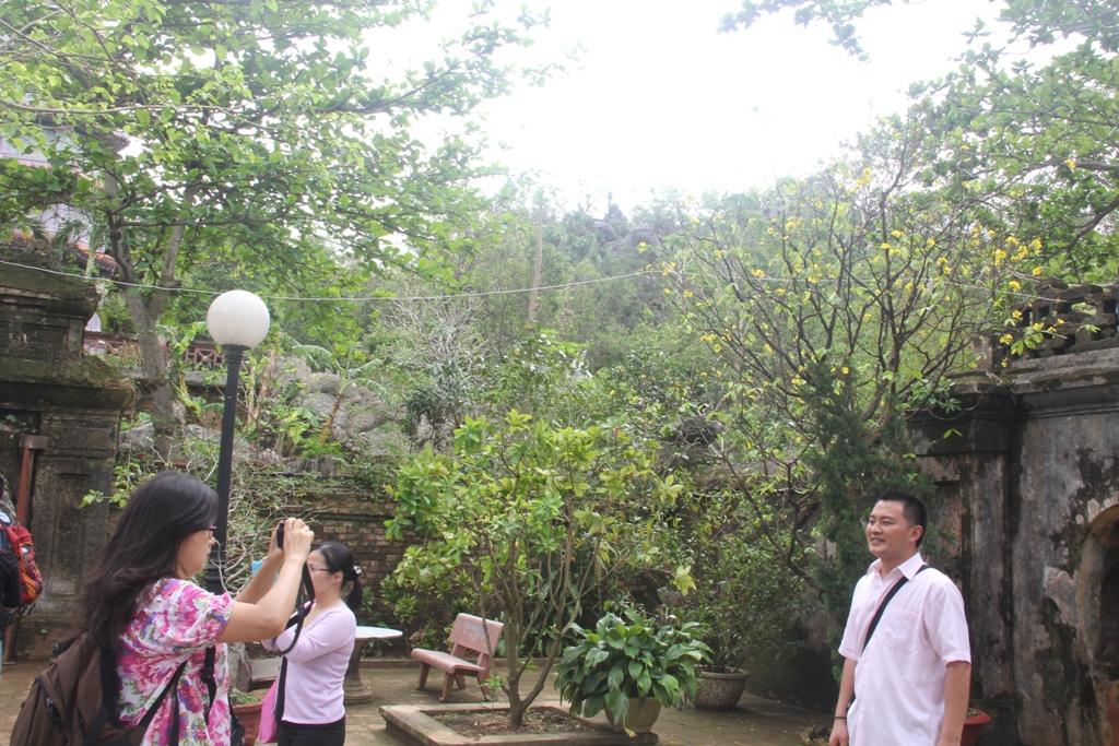 Cận cảnh hoa mai nở rợp trời trên núi Ngũ Hành Sơn 9