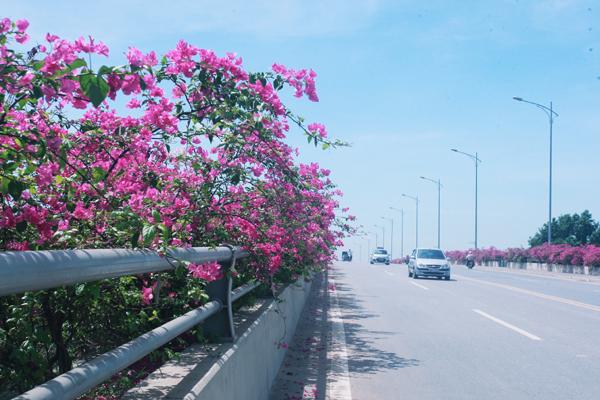 hoa giay 4