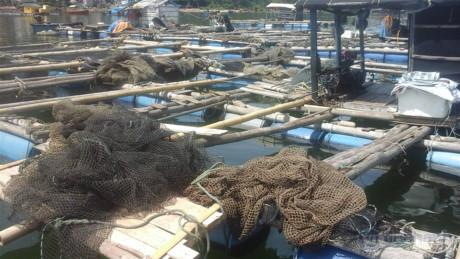 Người dân nuôi cá hiện đang rất hoang mang khi cá chết hàng loạt