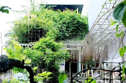 Ngôi nhà hai tầng nhỏ được bao phủ bởi toàn cây xanh.