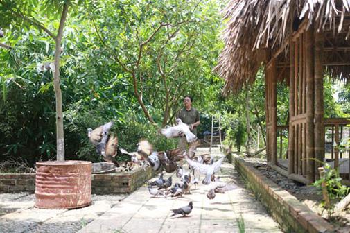 Đàn chim bồ câu với khoảng hơn 50 con của danh hài Giang Còi