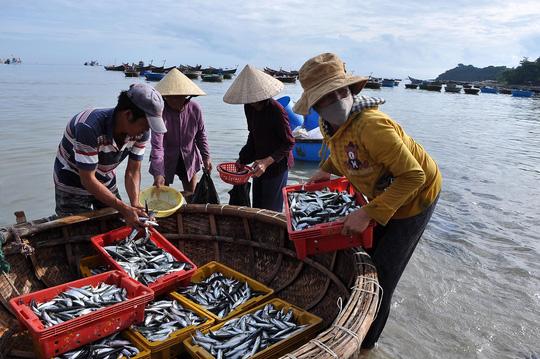 Bộ Y tế kết luận, tất cả hải sản như: Cá ngừ, cá thu, cá nục các loại, cá chỉ vàng, cá bạc má, cá hố, cá bò, cá cam, cá trích, cá đối, cá cơm và các loại hải sản khác sống ở tầng nổi, hải sản tại đầm nuôi của 4 tỉnh miền Trung đều đảm bảo an toàn để sử dụng làm thực phẩm.  Tuy nhiên, các hải sản như: ghẹ, tôm, tôm tít, ốc, mực, cá đuối, cá đục, bạch tuộc, cua đá và các hải sản khác sống ở tầng đáy trong vòng 13,5 hải lý chưa đảm bảo an toàn để sử dụng làm thực phẩm.