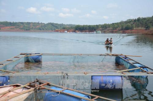 Lồng nuôi cá của người dân trên lòng hồ thủy điện Đắk Rtih gần vị trí hút nước thô của nhà máy cấp nước sinh hoạt cho thị xã Gia Nghĩa. Ảnh: Ngọc Minh