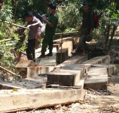 Hiện trường vụ tàn phá rừng