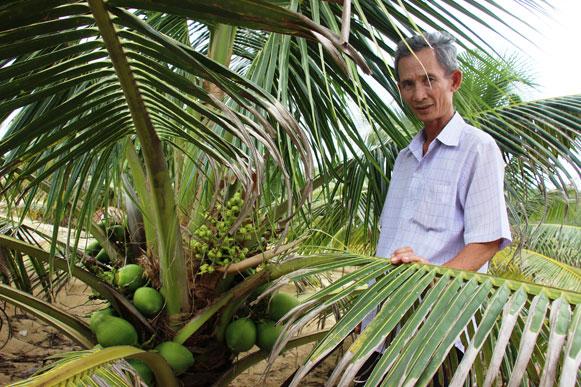 Ông Nguyễn Văn Dậu bên cây dừa xiêm lùn da xanh trĩu quả. Ảnh: Dũ Tuấn