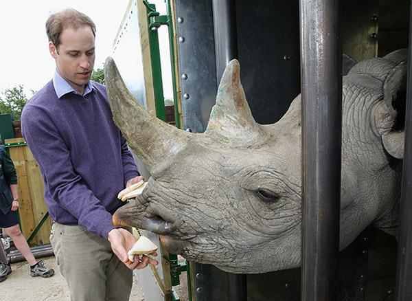 William luôn nỗ lực bảo vệ các loài động vật quý hiếm, trong đó có tê giác. Ảnh: Hello Magazine