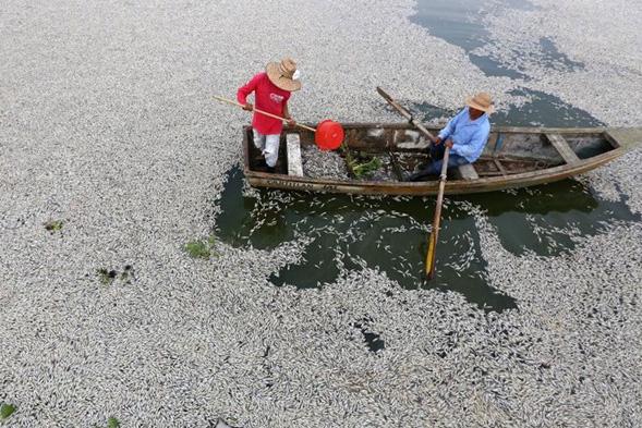Chính quyền bang Jalisco khẳng định nguyên nhân hơn 50 tấn cá chết là do các nhà máy xả thải trực tiếp vào đầm. Nguồn: SBS