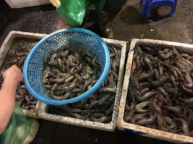 Sau khi có thông tin cá biển chết hàng loạt ở miền Trung, dân Hà Nội bắt đầu e dè khi mua các loại hải sản đông lạnh
