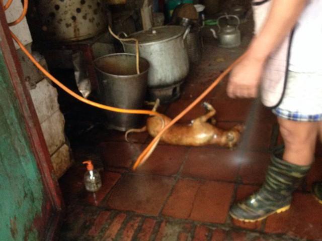 Chủ quán khò chó ngay dưới nền nhà và xịt nước rửa rất mất vệ sinh. Ảnh: N.T
