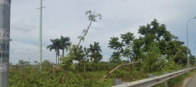 Nhiều cây xanh bị bật gốc, nghiêng ngã vẫn chưa được khắc phục.