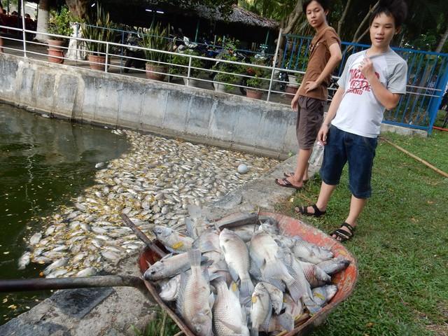 Một số người cho biết, hiện tượng cá chết xuất hiện rải rác 1-2 ngày nay, tuy nhiên đến ngày 1/8 thì cá chết rất nhiều, nổi bồng bềnh, trôi dạt vào bờ...Ảnh: Đức Hoàng