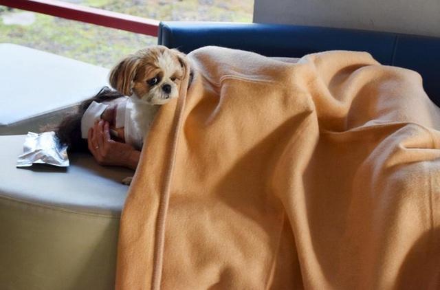 Một người đàn ông bị thương nặng đang nằm cùng chú chó cưng tại 1 trung tâm cứu hộ ở thành phố Mashiki, tỉnh Kumamoto.