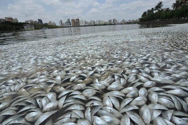Người dân cho rằng ô nhiễm môi trường chính là nguyên nhân khiến cá chết hàng loạt.