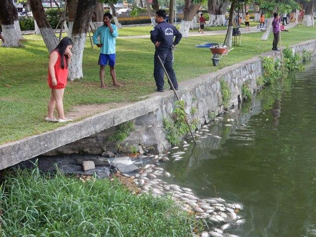 Cá chết khiến Công viên 29-3 ít người tới hóng mát như thường lệ. Một số em nhỏ nhà gần công viên ra công viên, nhưng...Ảnh: Đức Hoàng