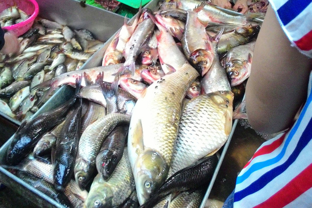Ruồi nhặng bâu quanh cá tại chợ thực phẩm Dịch Vọng Hậu (ảnh chụp ngày 10/5). Ảnh: C.Tuân