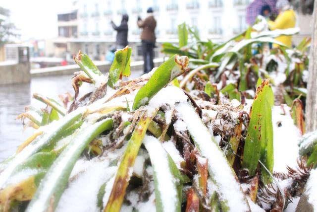 Tuyết phủ kín trên những nhánh cây Ảnh: Nghiêm Linh