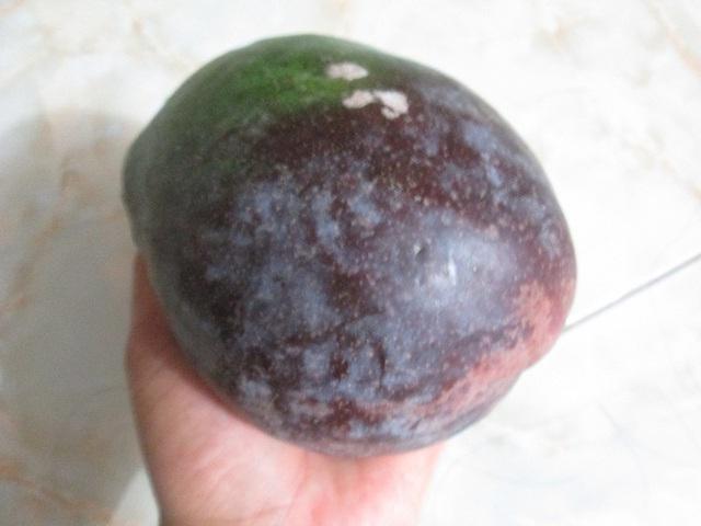 Thông thường, một quả xoài tím nặng từ 3-5 lạng. Ảnh: Nông Thuyết