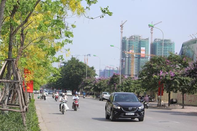 Đầu tháng 5, cùng với sắc tím của bằng lăng, sắc đỏ của hoa phượng, hoàng yến khoe sắc vàng báo hiệu một mùa hè rực rỡ lại về với Hà Nội.