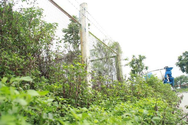 Trước sự lãng phí này, chủ tịch Hà Nội cho biết, thời gian qua thành phố quyết định dừng lại toàn bộ việc cắt tỉa và trồng cây hoa cảnh tại các vườn hoa trên địa bàn (chỉ để lại một số vườn hoa xung quanh hồ Hoàn Kiếm và một số điểm quan trọng). Quyết sách này giúp thành phố tiết kiệm được khoảng 700 tỷ đồng mỗi năm.